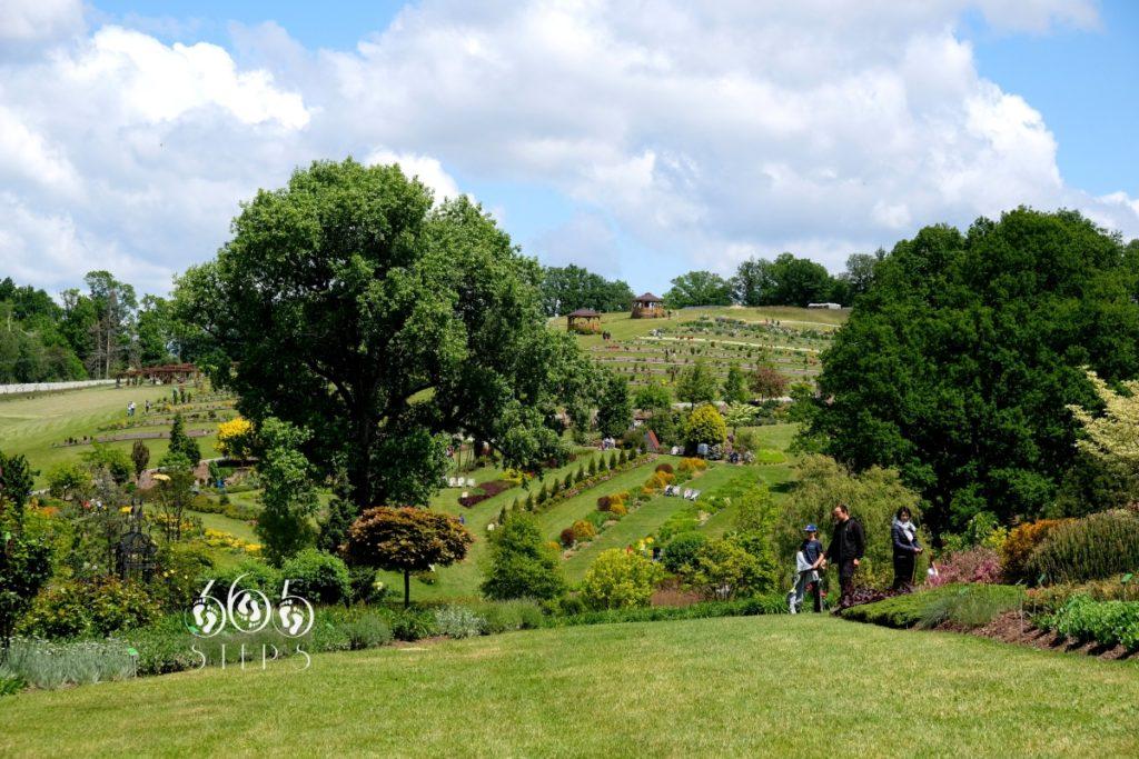 Arboretum w Wojsławicach, zielone zbocza